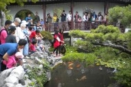 Koi fish feeding.jpg