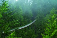 Mists in Capilano Canyon.jpg