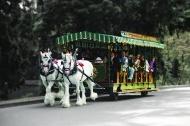 Tram_blurColourFade.jpg