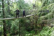 tree top, suspension bridge, trees