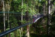 canopy, walkway, greenheart, ubc